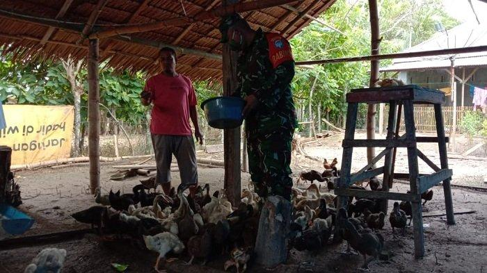 Babinsa Koramil Idi Tunong Aceh Timur Berikan Motivasi kepada Peternak BebekPetelur