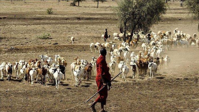 Ketika Prediksi Cuaca Menyelamatkan Nyawa, Sebuah Kisah dari Bencana di Somalia