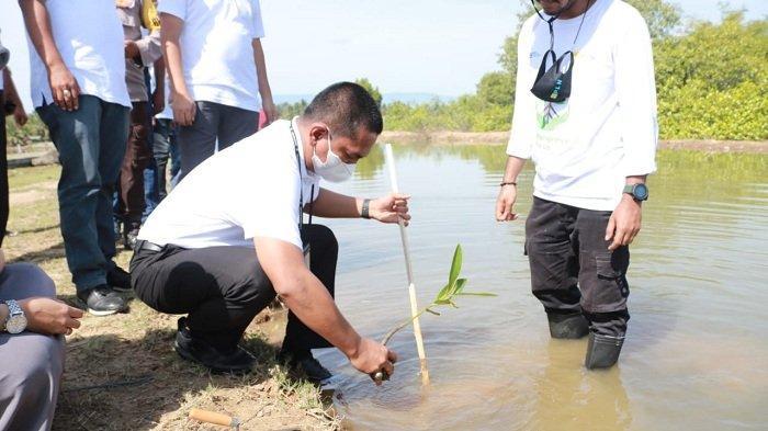 Seulanga dan PLN Aceh Tanam Mangrove di Alue Naga