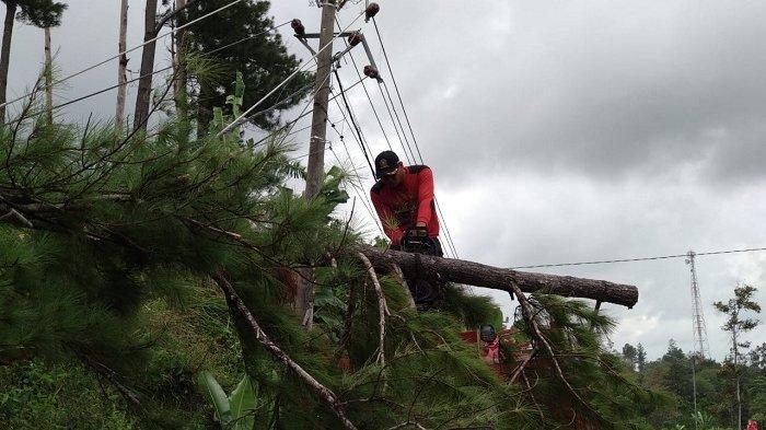 Pohon Tumbang di Lembah Seulawah Tutupi Jalan Nasional Banda Aceh-Medan