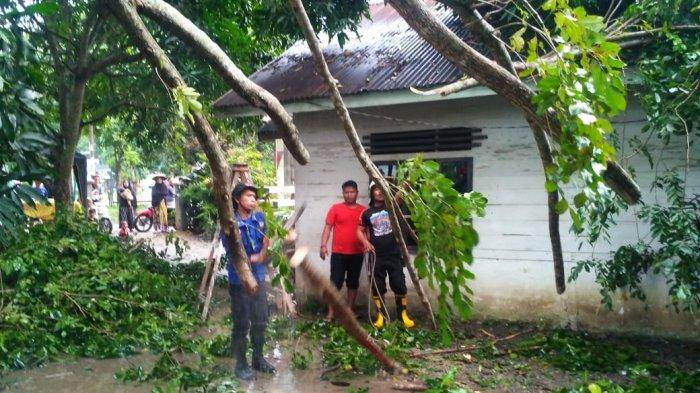 Pohon Tumbang Timpa Rumah Janda Miskin di Lubok Aceh Besar, Juga Hantam Dua Motor dan Satu Nissan