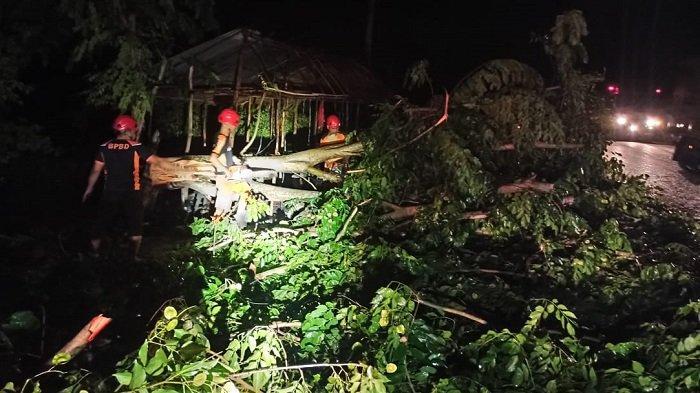Puluhan Rumah di Ranto Seulamat Aceh Timur Rusak Tertimpa Pohon Tumbang