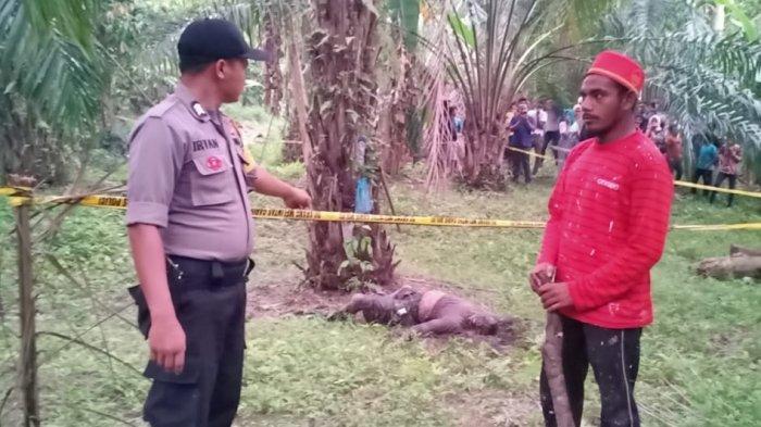 BREAKING NEWS - Seorang Pria Ditemukan Meninggal di Kebun Sawit Pedalaman Aceh Utara