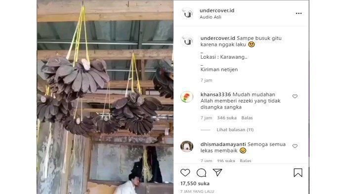 Postingan akun Instagram @undercover.id, Senin (19/7/2021) tentang video keluhan seorang pedagang buah yang mengaku kena dampak kebijakan PPKM darurat, dagangannya tak kunjung laku hingga akhirnya membusuk di gantungan.