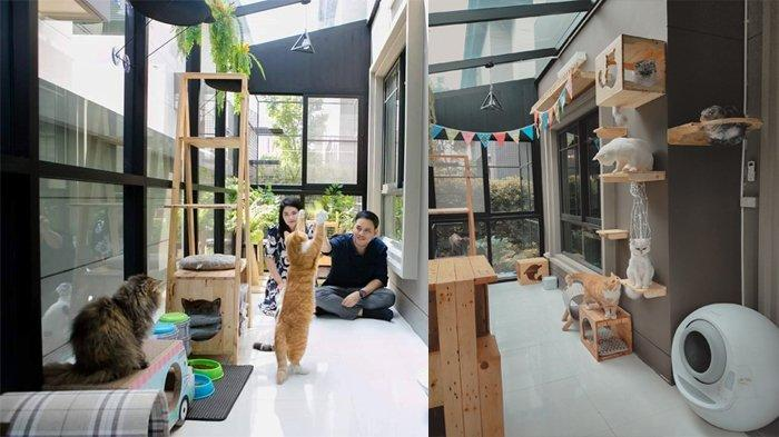 Pria Ini Rela Habiskan Uang Rp 90 Juta Lebih Demi Bangun Rumah Kucing Peliharaannya, Ini Tampilannya