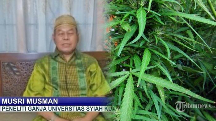 Kontroversi Ganja, Profesor dari Aceh Sebut Ganja Bisa Obati 30 Penyakit, Dari Virus hingga Kanker