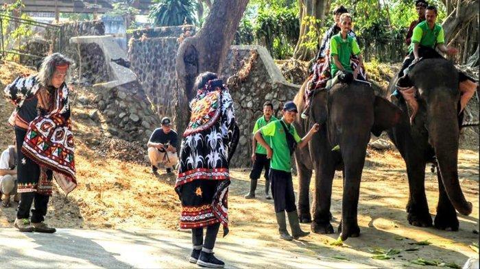 Seniman Gayo Menari Bersama Gajah di Kebun Binatang Jurug Solo