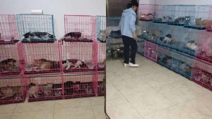 China Kembali Jadi Sorotan, Ratusan Kucing Curian Siap Disembelih Ditemukan di Belakang Sebuah Hotel