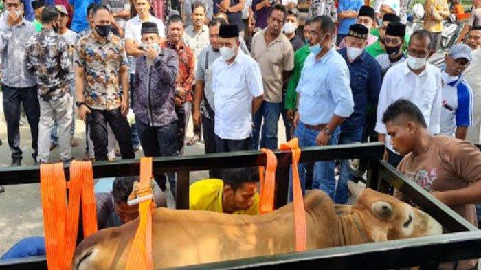 Pidie Jaya Salurkan 182 Hewan Kurban, akan Dibagikan kepada 10.920 Kaum Miskin di 222 Gampong