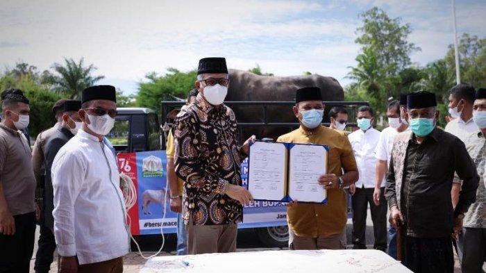 Gubernur Nova Iriansyah Serahkan Sapi Kurban Presiden untuk Aceh Besar, Bupati Ucap Terimakasih