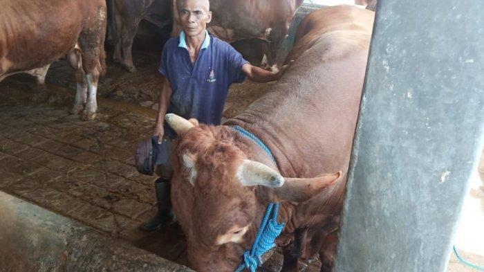Sapi-sapi Termahal yang Dibeli Presiden Jokowi untuk Kurban di Hari Raya Idul Adha 1441 H
