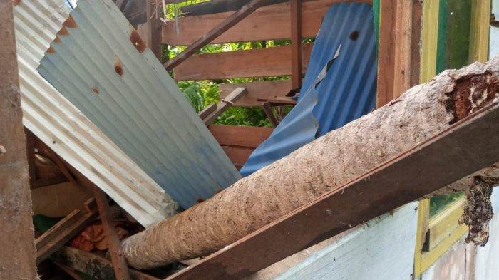 Satu Rumah di Simeulue Ditimpa Pohon Kelapa, Suami dan Istri Patah Tulang saat Tertidur Lelap