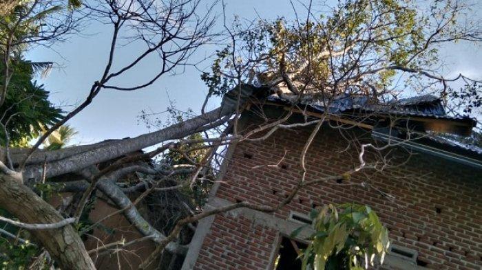 Satu Rumah di Jangka Rusak Tertimpa Pohon Tumbang