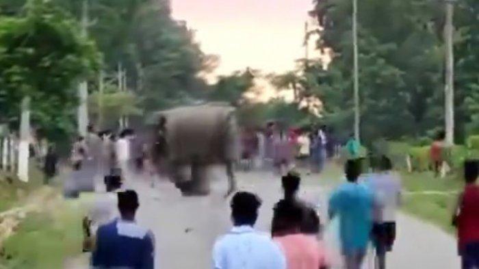 Seekor Gajah Menyerang dan Menginjak Seorang Pria hingga Tewas, Videonya Ditonton 180.000 Kali