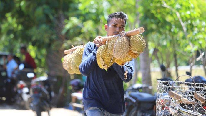 Sensasi Durian Runtuh di Lhoong Aceh Besar