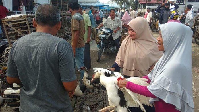 Bulan Maulid, Harga Beli Bebek dan Ayam Naik di Pasar Cureh Bireuen, Ini Taksiran Harga dan Jenisnya