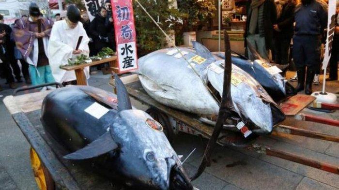 Ikan Tuna Seberat 405 Kg Dilelang, Laku Terjual Rp 4,3 Miliar