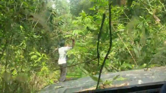 BREAKING NEWS- Tim Offroad Galus Terjebak di Hutan Tamiang, Logistik Menipis dan Anggota Mulai Sakit