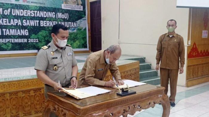 Lawan Kampanye Negatif Kelapa Sawit, Aceh Tamiang Sertifikasi Perkebunan Masyarakat