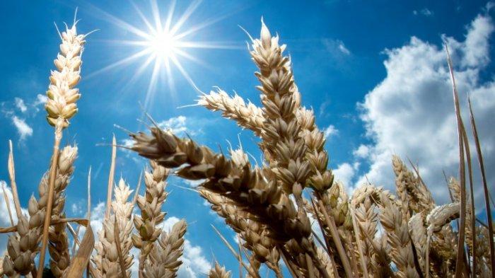 Bumi Semakin Panas, Orang Akan Mati Tanpa AC, Apa Iya? Ini Penjelasannya