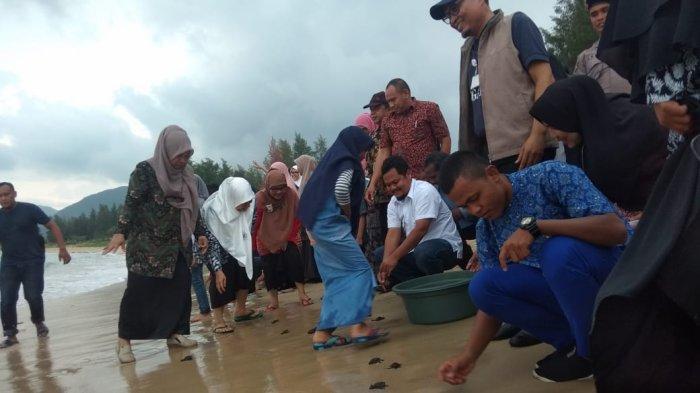 Siswa dan GuruSMA Negeri 1 Lhoknga Lepas Ratusan Ekor Tukik