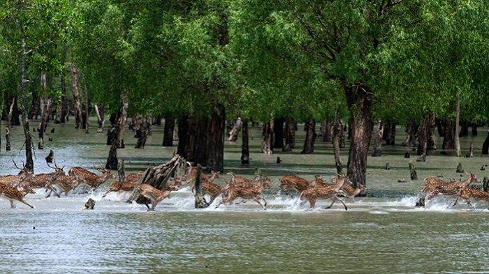Menjelajahi Sundarbans, Hutan Mangrove Terbesar yang Ada di Dunia