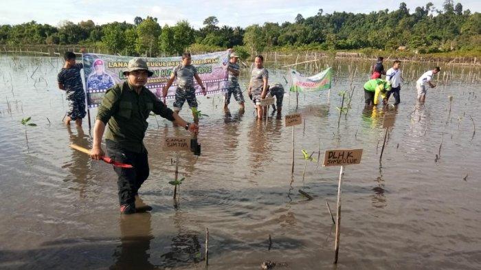 Peringati Hari Mangrove Sedunia, Komunitas Peduli Sampah Plastik Simeulue Tanam Mangrove