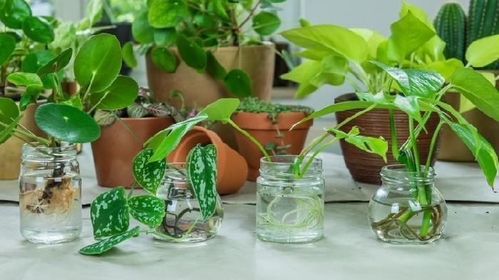 Tips Mempercantik Rumah Pakai Tanaman Hias Tanpa Ribet, Bisa Berbentuk Minimalis Juga
