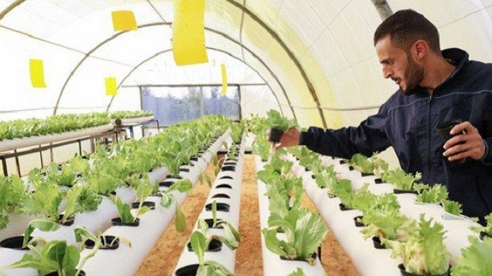 Pemuda Libya Kembangkan Tanaman Hidroponik, Atasi Kesulitan Petani Tradisional di Gurun