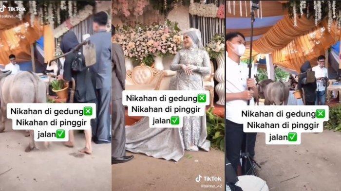 VIRAL Pesta Pernikahan di Pinggir Jalan, Sesi Foto Pengantin Terganggu Ada Kerbau Lewat Pelaminan