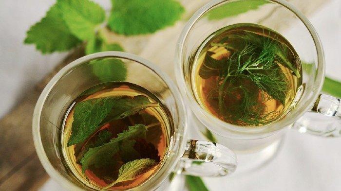 Tips Mudah Menurunkan Berat Badan, dr Zaidul Akbar Sarankan Rutin Minum Teh Jati Cina, Ini Resepnya