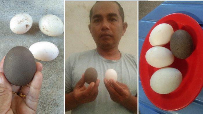 Unik, Ini Telur Bebek Bercangkang Hitam, Ditemukan Peternak Desa Denong, Aceh Besar