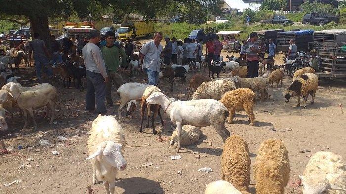 Pasar Hewan Gandapura Tetap Ramai di Tengah Pemberlakuan Social Distancing, Ini Edaran Dinas Terkait