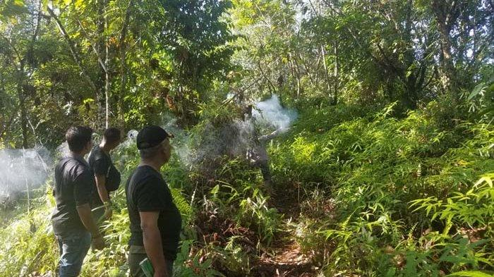 Kawanan Gajah Liar Teror Warga Blang Lango