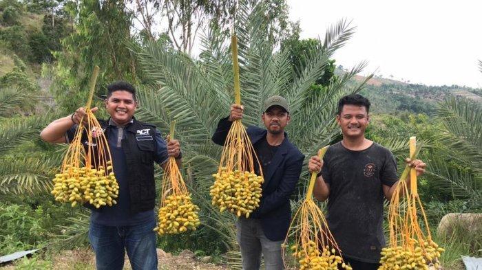 Global Wakaf ACT Aceh Panen Perdana Pohon Kurma di Aceh Besar