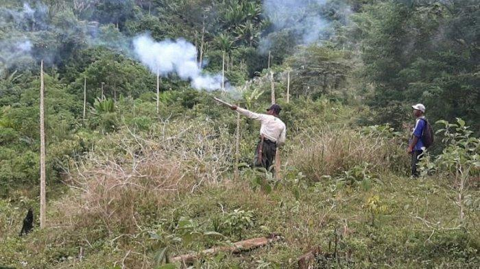 Petugas BKSA Aceh Bersama Relawan Usir Kawanan Gajah Liar di Pidie Jaya