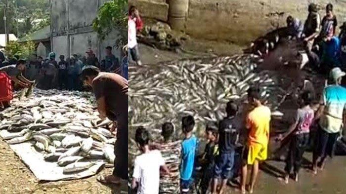 Kemunculan satu ton ikan kuwe yang kemudian masuk dalam jaring pukat nelayan bikin warga heboh.