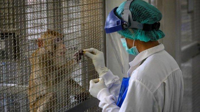 Thailand Ujicoba Vaksin Virus Corona ke Monyet