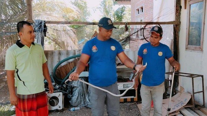 Ular Kobra Sepanjang 1,5 Meter Menyelinap ke Rumah Mantan Keuchik Jantang
