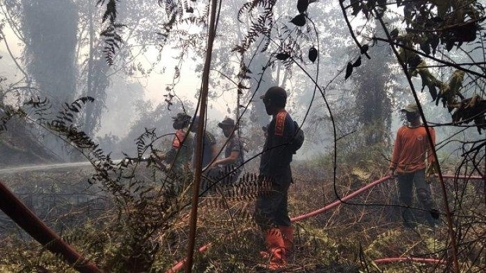 Kebakaran Meluas, Bupati Tetapkan Status Siaga Darurat Karhutla di Aceh Selatan Selama 60 Hari