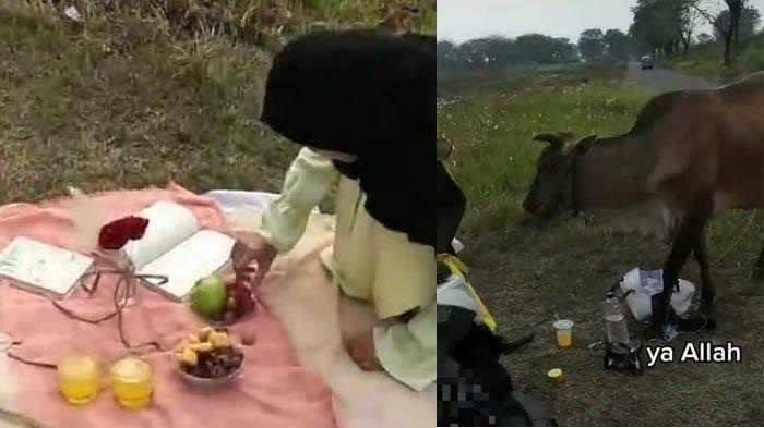Viral Niat Piknik Estetik, Lembu Malah Datang dan Habiskan Makanan Perempuan ini