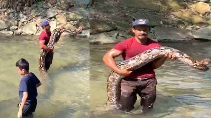 Ular piton disebut kencing dan terkena seorang bocah saat berendam di sungai diunggah oleh akun TikTok @mohicanz_exotic, Minggu (1/11/2020).   Artikel ini telah tayang di serambinews.com dengan judul VIRAL Ular Piton 'Cik Kiah' Disebut Kencing dan Terkena Seorang Bocah saat Berendam di Sungai, https://aceh.tribunnews.com/2020/11/02/viral-ular-piton-cik-kiah-disebut-kencing-dan-terkena-seorang-bocah-saat-berendam-di-sungai?page=all. Penulis: Syamsul Azman Editor: Hadi Al Sumaterani
