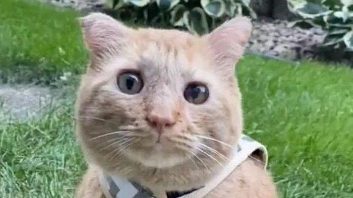Pesawat Tarco Airlines Terpaksa Putar Balik, Gegara Pilot Dicakar Kucing yang Masuk ke Dalam Kokpit