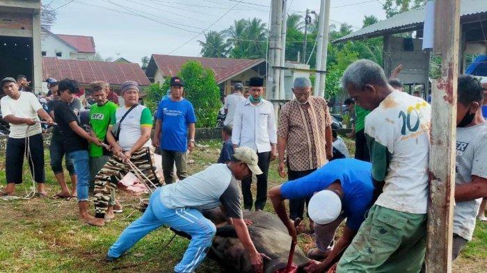 Sebut Semangat Ibadah Kurban Saat Pandemi, Warga Tanjung Selamat Aceh Besar Sembelih 42 Ekor Hewan