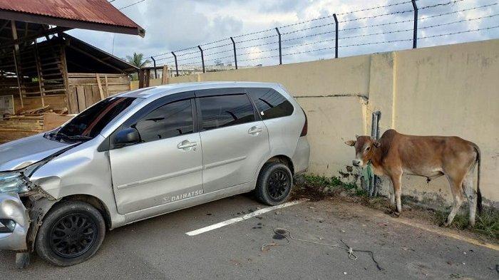 Pengejaran Komplotan Pencuri Lembu Ini Seperti Film Action, Diwarnai Kejar-kejaran & Letusan Senjata