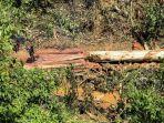 aktifitas-pembalakan-liar-di-kawasan-hutan-lindung-jalan-lintas_20180130_093612.jpg