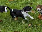 anjing-bayi-tabung_20151210_193849.jpg