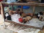 anjing-dijual-di-medan_20180223_010502.jpg
