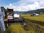 areal-tanaman-padi.jpg