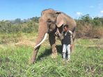 arjuna-38-seekor-gajah-dengan-mahout-pawang-gajah_20180814_091050.jpg